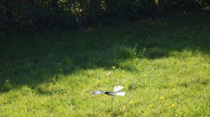 bionic bird battement d'aile
